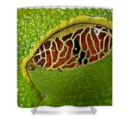 Red Eyed Tree Frog Eyelid Costa Rica Shower Curtain