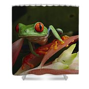 Red-eyed Tree Frog In Costa Rica Shower Curtain
