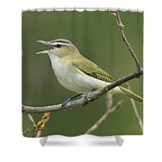 Red-eyed Vireo Vireo Olivaceus Calling Shower Curtain