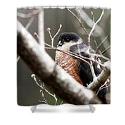 Red Eyes Shower Curtain
