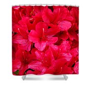 Red Floral Art Prints Rhododendron Flowers Rhodies Shower Curtain by Baslee Troutman