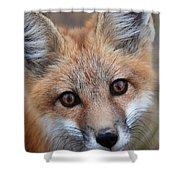 Red Fox 352 Shower Curtain