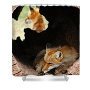 Red Fox Dreaming Shower Curtain