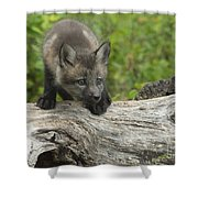 Red Fox Kit Shower Curtain