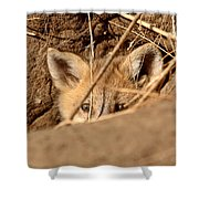 Red Fox Pup Peaking Out Of Den Shower Curtain