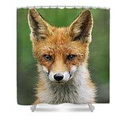 Red Fox Vulpes Vulpes, Hoge Veluwe Shower Curtain