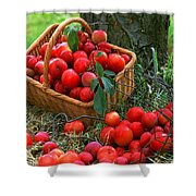 Red Fresh Plums In The Basket Shower Curtain