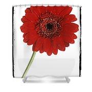 Red Gerber Daisy Shower Curtain