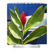 Red Ginger Shower Curtain by Randi Shenkman