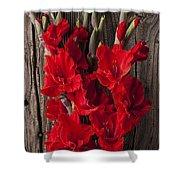 Red Gladiolus Shower Curtain