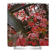 Red Grape Leaves And Beams Shower Curtain