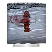 Red Headed Duck Shower Curtain