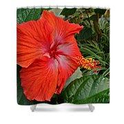 Red Hibiscus Flower Shower Curtain