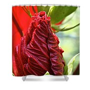 Red Hibiscus Torch Shower Curtain
