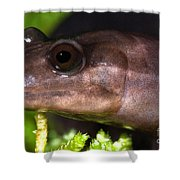 Red Hills Salamander Shower Curtain