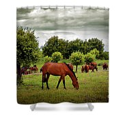 Red Horses Shower Curtain