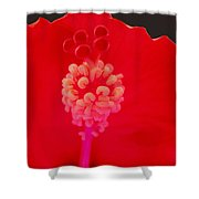 Red Hot Hibiscus Shower Curtain