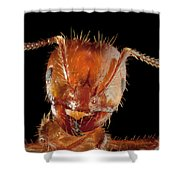 Red Imported Fire Ant Solenopsis Shower Curtain