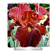 Red Iris Shower Curtain