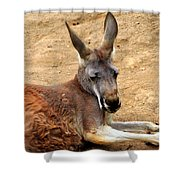 Red Kangaroo Shower Curtain