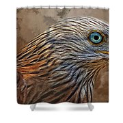 Red Kite - Featured In The Groups - Spectacular Artworks And Wildlife Shower Curtain