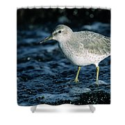 Red Knot Calidris Canutus In Winter Shower Curtain