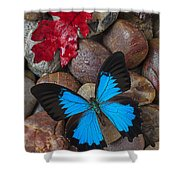 Red Leaf And Blue Butterfly Shower Curtain