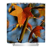 Red Leaves In Winter Sunset Shower Curtain