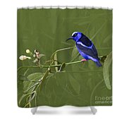 Red-legged Honeycreeper - Cyanerpes Cyaneus Shower Curtain