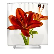 Red Lily Number One Square Shower Curtain