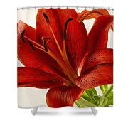 Red Lily Number Two Shower Curtain