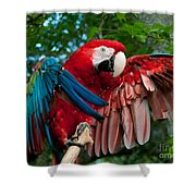 Red Macaw Shower Curtain