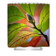 Red Magnolia Leaves With Bud Shower Curtain