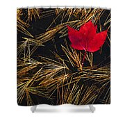 Red Maple Leaf On Pine Needles In Pool Shower Curtain by Mike Grandmailson