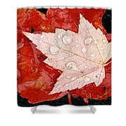 Red Maple Leaves Shower Curtain