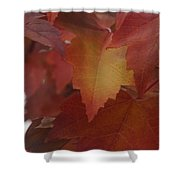 Red Maple With A Splash Of Gold Shower Curtain