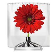 Red Mum In Striped Vase Shower Curtain