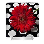 Red Mum With White Spots Shower Curtain by Garry Gay