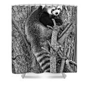 Red Panda 2 Monochrome Shower Curtain