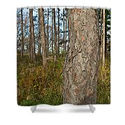 Red Pine Forest Shower Curtain