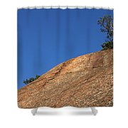 Red Pine Tree Shower Curtain by Ted Kinsman