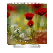 Red Poppies And Small Daisies Bloom Shower Curtain