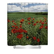 Red Poppies Edge A Field Near Moscow Shower Curtain
