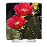 Red Prickly Pear Cactus  Shower Curtain