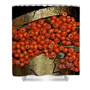 Red Pyracantha Berries Shower Curtain
