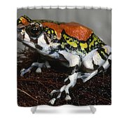Red Rain Frog Shower Curtain