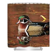 Red Reflection Of A Wood Duck Shower Curtain