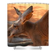 Red Roos Shower Curtain