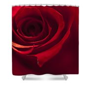 Red Rose Close Up Shower Curtain