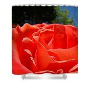 Red Rose Flower Bright Colorful Vivid Red Floral Rose Shower Curtain